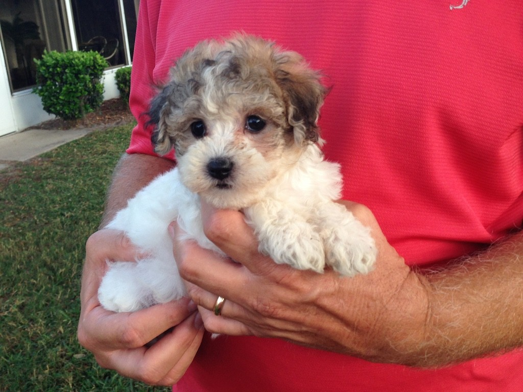 Mims Fl Dog For Sale